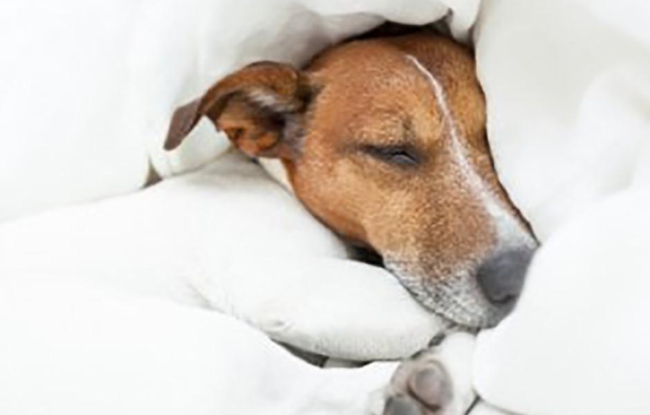 Forebyg søvnbesvær