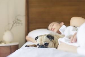 Stort søvnbehov